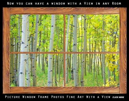 Aspen Tree Forest Autumn Picture Window Frame View Gallery