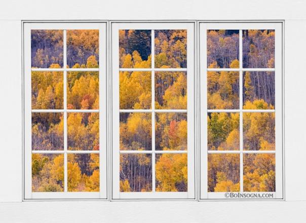 Autumn Aspen Trees White Picture Window View  Acrylic Print