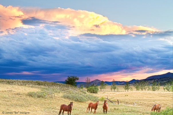 Horses On The Storm 2