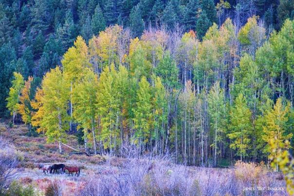 Autumn Grazing Horses Bonanza