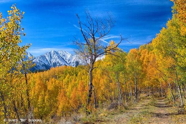 Colorado Fall Foliage Back Country View