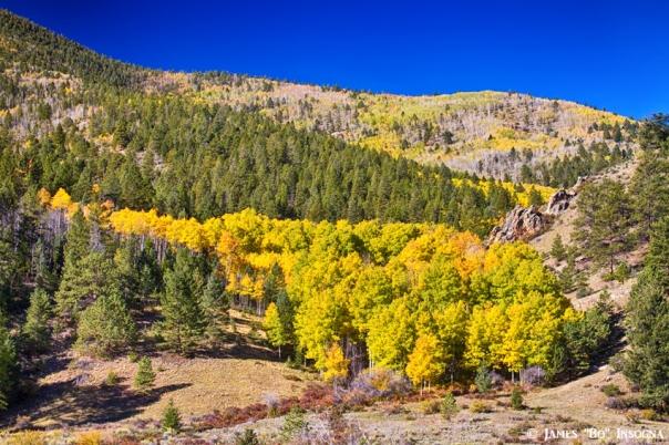 Colorado Gold and Blue