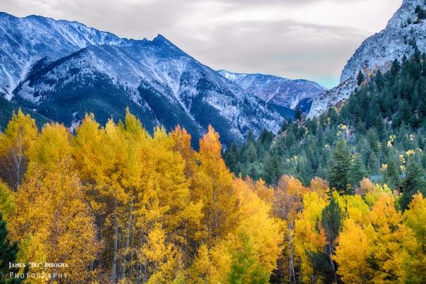 Colorful Crested Butte Colorado