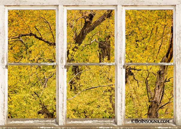 Cottonwood Fall Foliage Colors Rustic Farm Window View