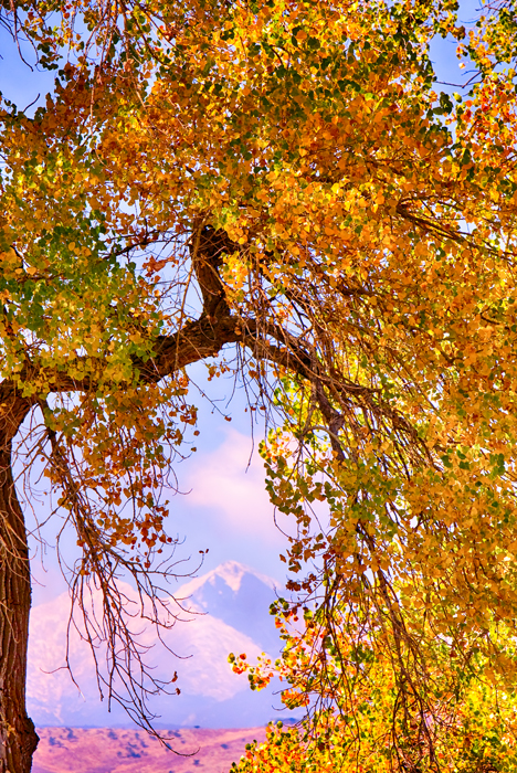 Twin Peaks Longs Peak Colorful Autumn View