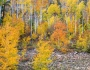 Colorful Autumn Forest In The Canyon of Cottonwood Pass