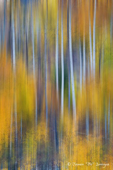 Surreal Colorful Aspen Tree Magic Abstract Art