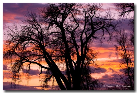 Beautiful Boulder County Tree Sunset