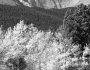 Longs Peak Autumn Scenic BW View