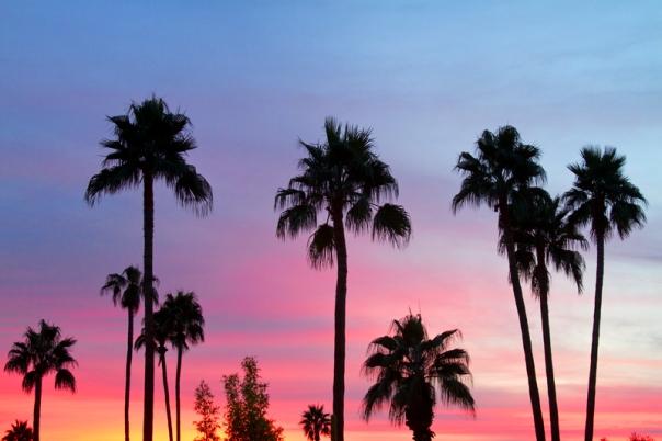 Paradise Palm Tree Sunset Sky