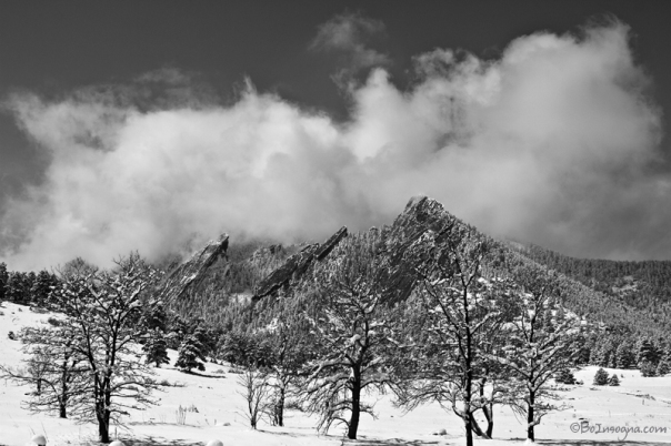 Snowy Trees And The Flatirons Boulder Colorado Black and White