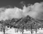 Snowy Trees And The Flatirons Boulder Colorado BW