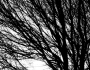 Light and Tree Branches in Black and White
