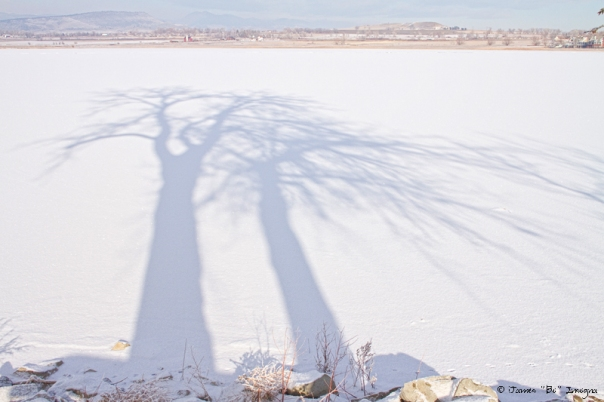 Tree Shadow Puppets - James Bo Insogna