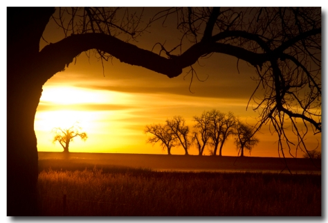 Golden Trees and Meadows Sunrise Photography Image