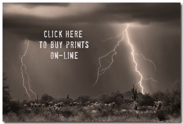 Click here to buy prints on line