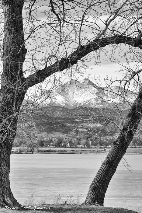 View Through The Trees To Longs Peak BW