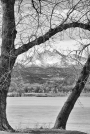 View Through The Trees To Longs PeakBW