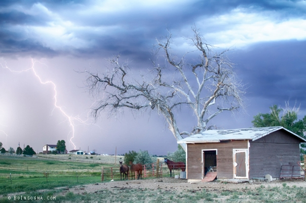 Art Print Country Horses Lightning Storm CO