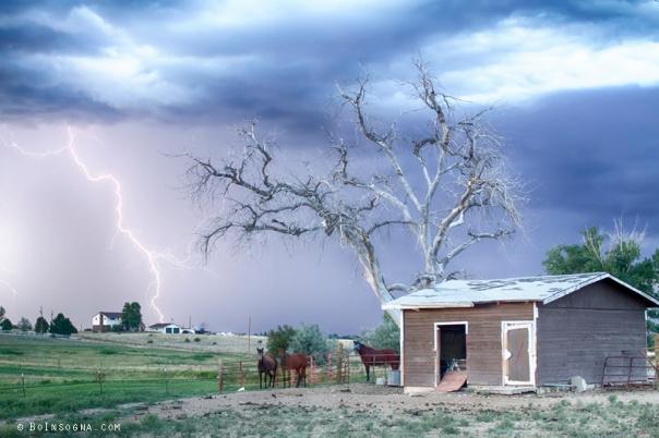 Art Print Country Horses Lightning Storm CO