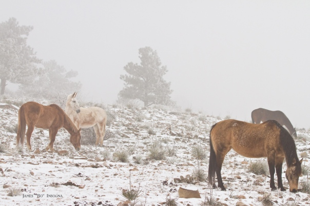 Horses in the Winter Snow and Fog  Metal Print