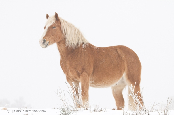 Smiling Palomino in the Snow