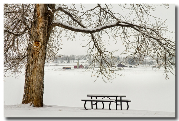 Snowy Winter Country Cottonwood Tree Landscape View