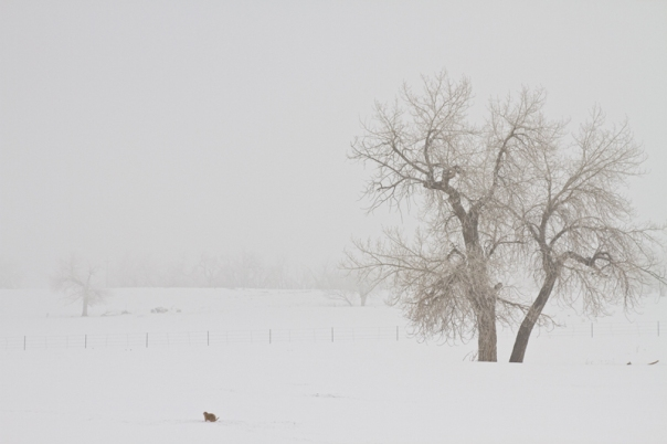 Photography Acrylic Prints Tree Snow Fog and The Prairie Dog