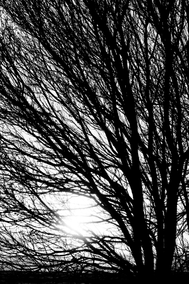 Tree Branches and Light Black and White  Metal Print