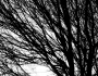 Black and White Tree Branches and Light