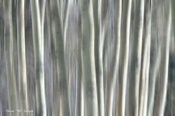 Forest of Dreams Metal Art Print