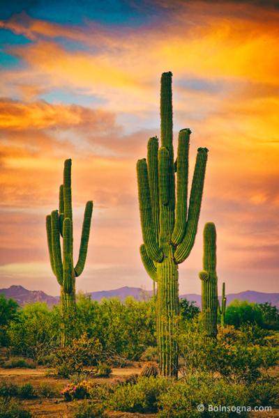 Arizona Life