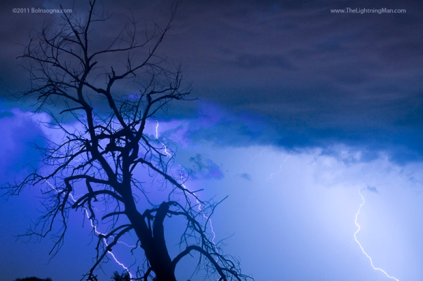 Lightning Tree Silhouette 38