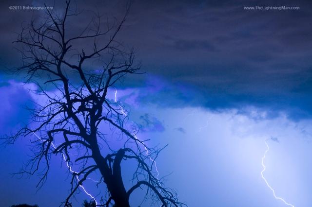 Lightning Tree Silhouette 38