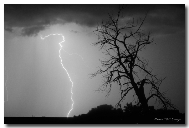 Lightning Tree Silhouette Black and White
