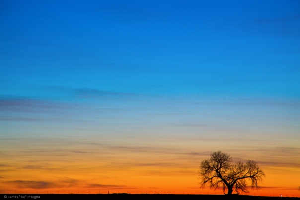 Lonely Tree on the Plains