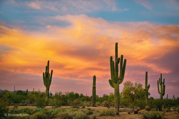 Saguaro Desert Life