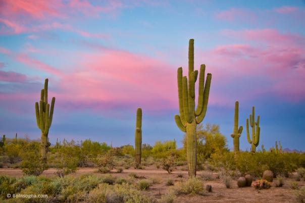 Southwest Desert Spring