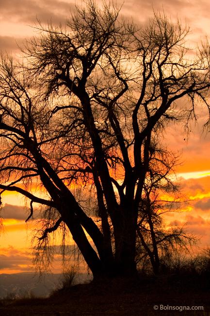 Boulder County Sunset-650bo