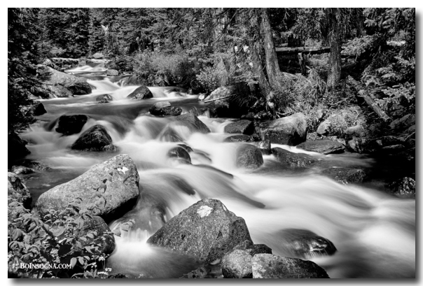 Cascading Rocky Mountain Forest Creek BW  Photography Prints