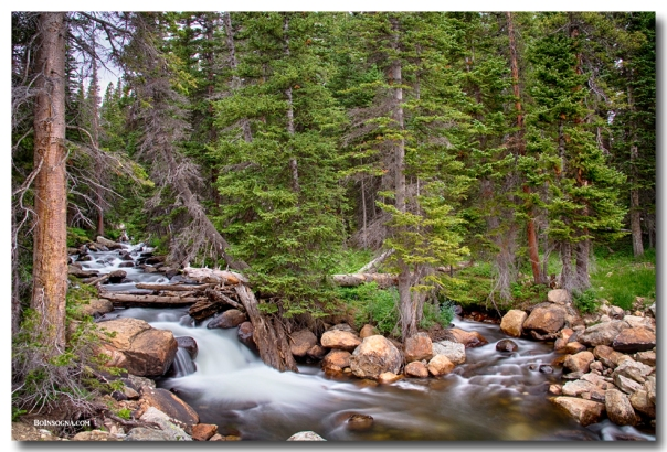 Colorado Rocky Mountain Forest Stream Art Print