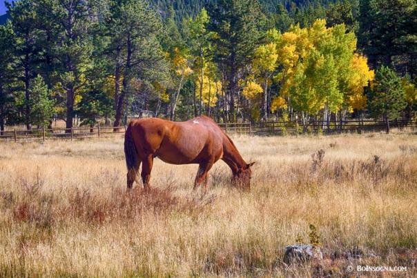 Autumn High Country Horse Grazing  Art Prints