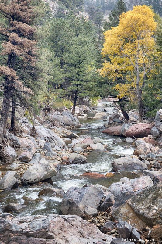 Canyon Creek Touch Of Gold