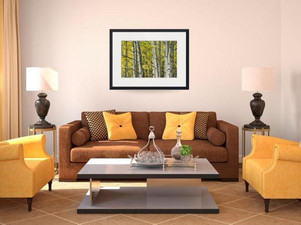 Autumn Aspen Tree Trunks In Their Glory Framed Print
