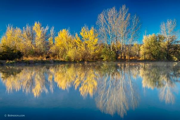 Coot Lake Autumn Reflections Art Print