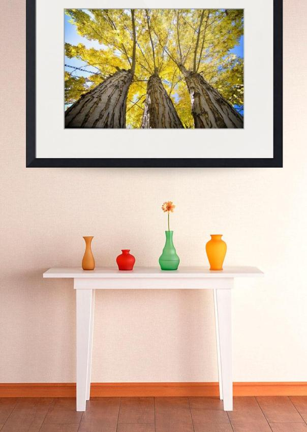 Golden Maple Standing Tall Art Print