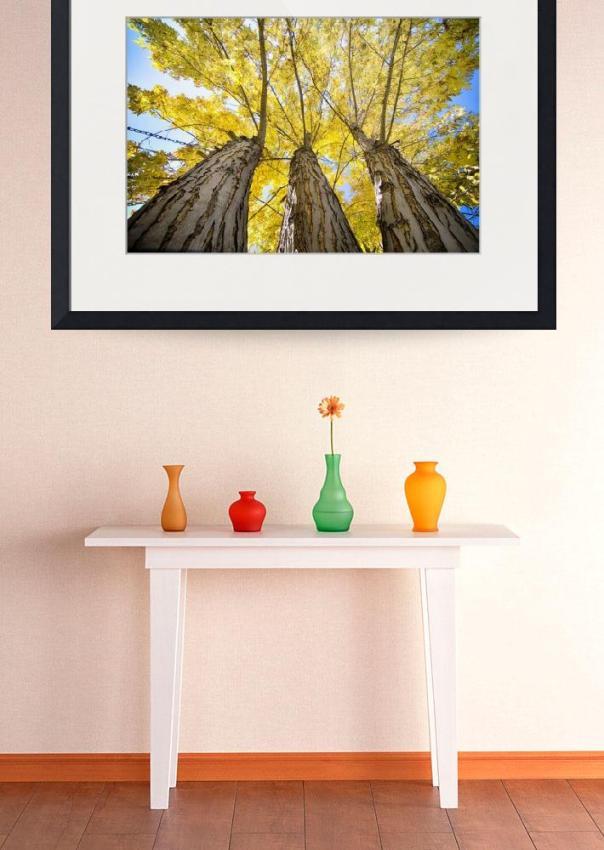 Golden Maple Standing Tall Art Print