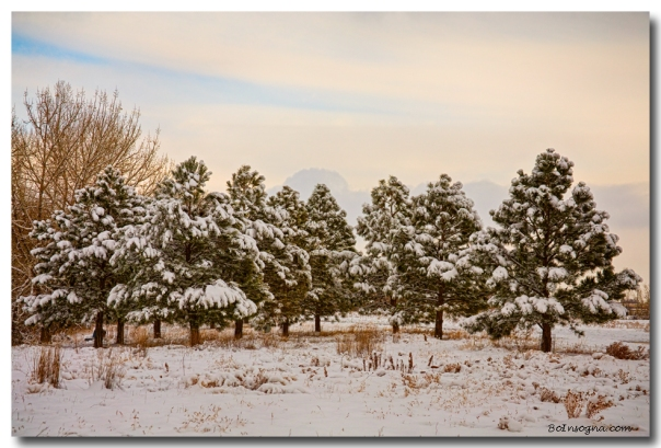 Snowy Winter Pine Trees Landscape Art Prints