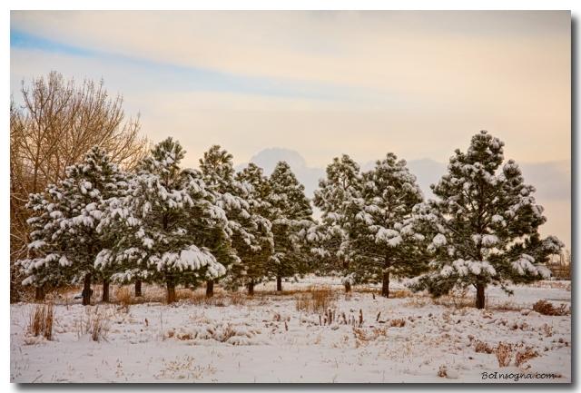 Snowy Winter Pine Trees Landscape Art Prints