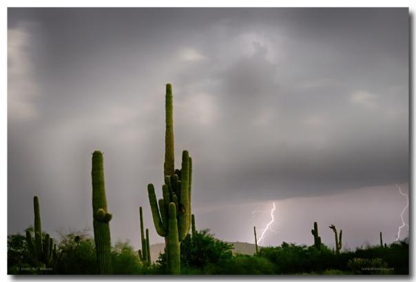 Sonoran Monsoon Lightning Thunderstorm Delight Art Print
